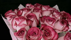 Rotating pink rose buds Stock Footage