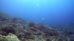 Diver bubbles going horizontally on reef with hawksbill turtle Stock Footage