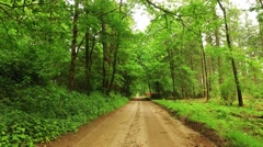 Biking in a beautiful country road in the forest Stock Footage