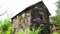 An old abandoned house with wisteria growing on it. Stock Footage