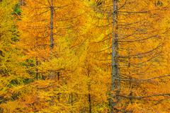 Fall Foliage Forest Closeup Photo. Autumn Forestry Colours. Stock Photos