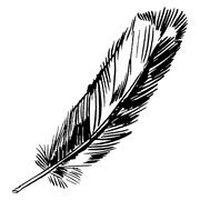 Hand-drawn vector feather, ink handpicked Piirros