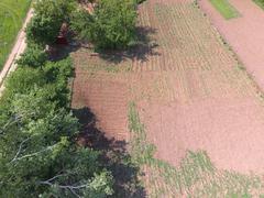 Top view of the homestead garden. spring planting in the garden. Stock Photos