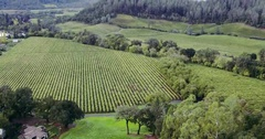 Aerial of vineyard and forest in the autumn, Napa Valley, USA Stock Footage