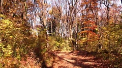 Autumn in deciduous forest Stock Footage