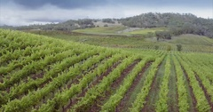 Aerial over vineyard in the Napa Valley, USA Stock Footage