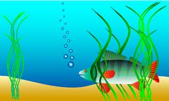 Underwater landscape - perch hiding in the weeds Stock Illustration
