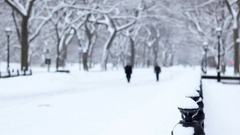 Snow Covered Literary Walk Central Park Manhattan Stock Footage