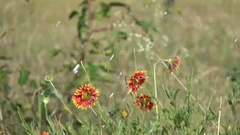Sunflowers Water Drops Falling Slow Motion Footage Stock Footage