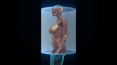 Female body scanning muscle structure. X-ray view. Stock Footage