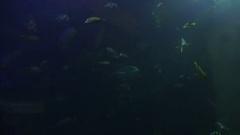 School of Fish Swimming in Aquarium Stock Footage