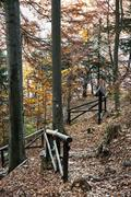 Hiking path with railing in the autumn deciduous forest, vertical composition Kuvituskuvat