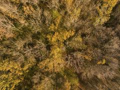 Aerial view of autumn forest. Kuvituskuvat