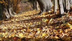 Park alley with many fall leaves Stock Footage