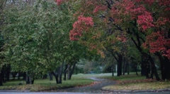 Beautiful alley in colorful autumn time during rain. 1920x1080 Stock Footage