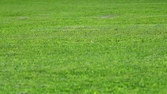 Green lawn Summer Stock Footage