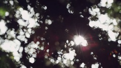 Slow motion Sunlight flaring through a group of trees Stock Footage