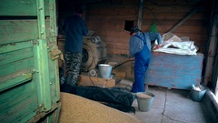 Agriculture summer end works. Men sifting grain with retro machine in barn Stock Footage