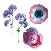 Wildflower rose flower in a watercolor style isolated. Stock Illustration