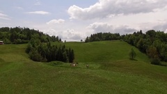 Alp Cows Drone Aerial Stock Footage
