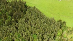 Alp Mountain forest Aerial Stock Footage