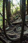View of forest with sweeping roots covering rocks Stock Photos