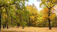 Time lapse - autumn forest. Stock Footage