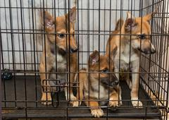 Three puppies in a cage Stock Photos