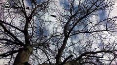 Autumn tree nut Stock Footage