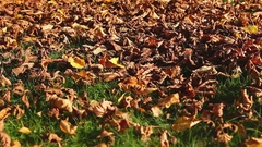 Leaf blower in action Stock Footage