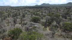 4K aerial of wild cacti in field on Bonaire Stock Footage