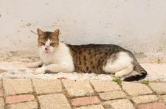 Homeless cat with a broken snout. Stock Photos
