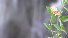 4K Small Flowers and Bokeh Effect Waterfall Background Stock Footage