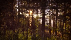 Beautiful magical forest lateral motion trees golden sun rays sunlight shimmer Stock Footage