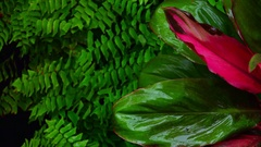 Amazing plants and flowers after rain in fantasy Indonesian deep jungles Stock Footage