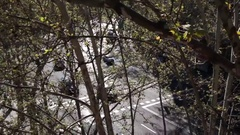Cars driving shots through tree foliage Stock Footage
