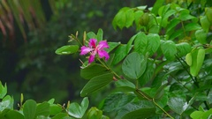 Plants and flowers after rain in fantasy Indonesian deep jungles. Zooming video Stock Footage