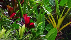 Wet season in tropics. Amazing plants and flowers in fantasy garden Stock Footage
