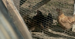 Chickens in Chicken Coop Behind Wire Stock Footage