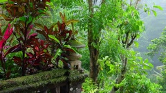 Wet season in tropics. Amazing plants and stone lantern in fantasy garden Stock Footage