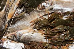 Dry fish and alive crayfish on white background Stock Photos