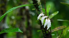 Wild orchid flowers after monsoon rain in Indonesian jungles  Stock Footage
