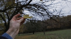 POV - I take a yellow leaf from tree in november day Stock Footage