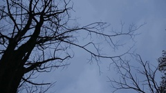 A view of the tops of trees, branches without leaves in November evening Stock Footage