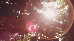 Slow motion Sunlight flaring through a group of trees with pink flares Stock Footage