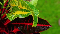 Wet season in tropics. Amazing plants and flowers in fantasy garden. With Audio Stock Footage