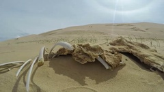 Skeleton of the animal in the dunese Hongoryn on the Gobi desert, Mongolia. F Stock Footage