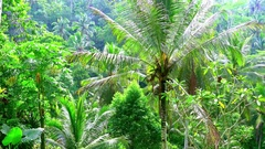 Abstract rainforest landscape with jungle plants. Indonesia Stock Footage