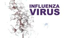 3d animation - Illustration of Influenza Virus cells Stock Footage