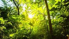 Sun Light through Leaves Stock Footage